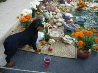 a Dia de los Muertos ofrenda at Mercado Hidalgo